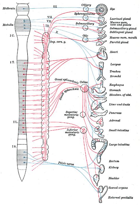 wpływ masażu lodem na układ nerwowy
